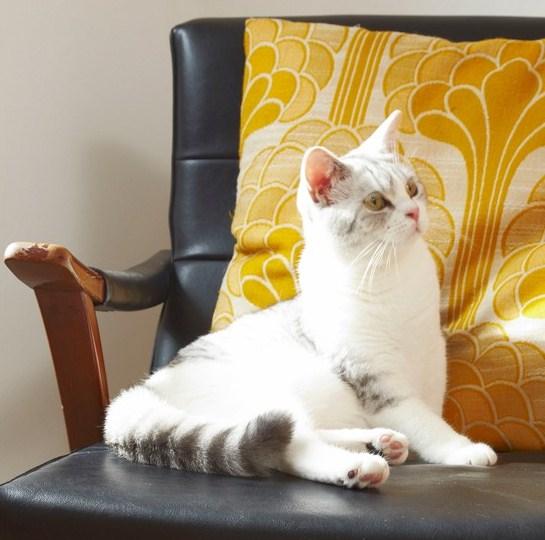 La sedia di chi, scusa?